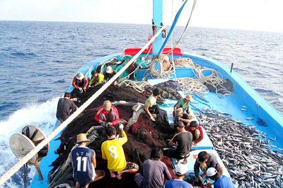 Hỗ trợ ngư dân đánh bắt xa bờ